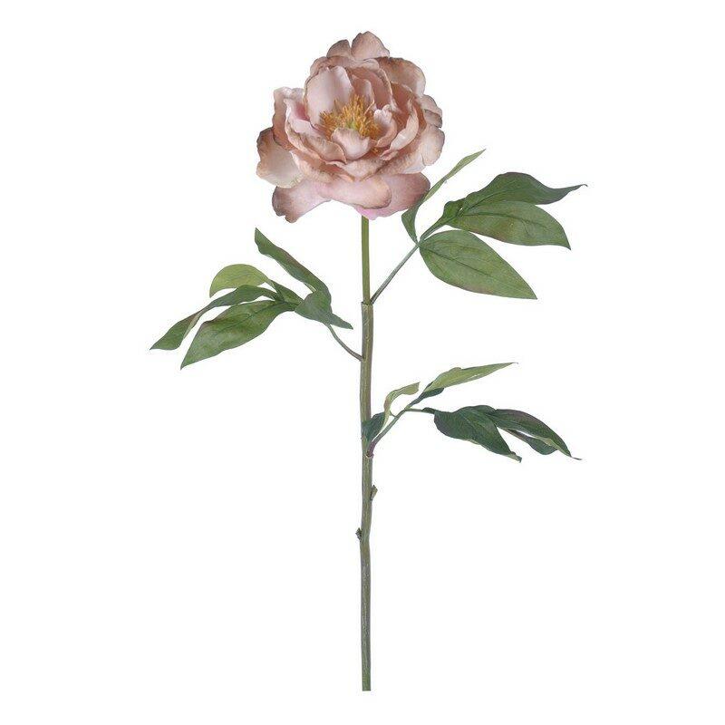 Pivoine Peony rose clair